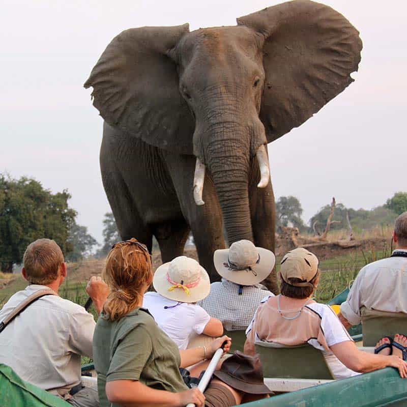 bushlife-safaris-mana-pools-canoe-elephant