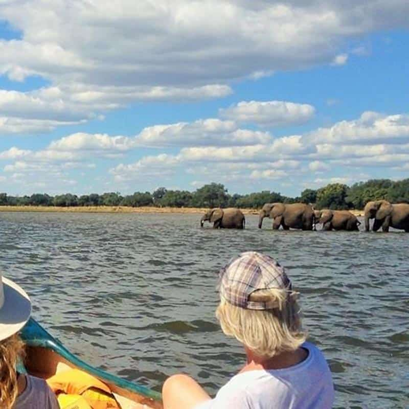 ruwesi-canoe-safaris-mana-pools-elephant-crossing
