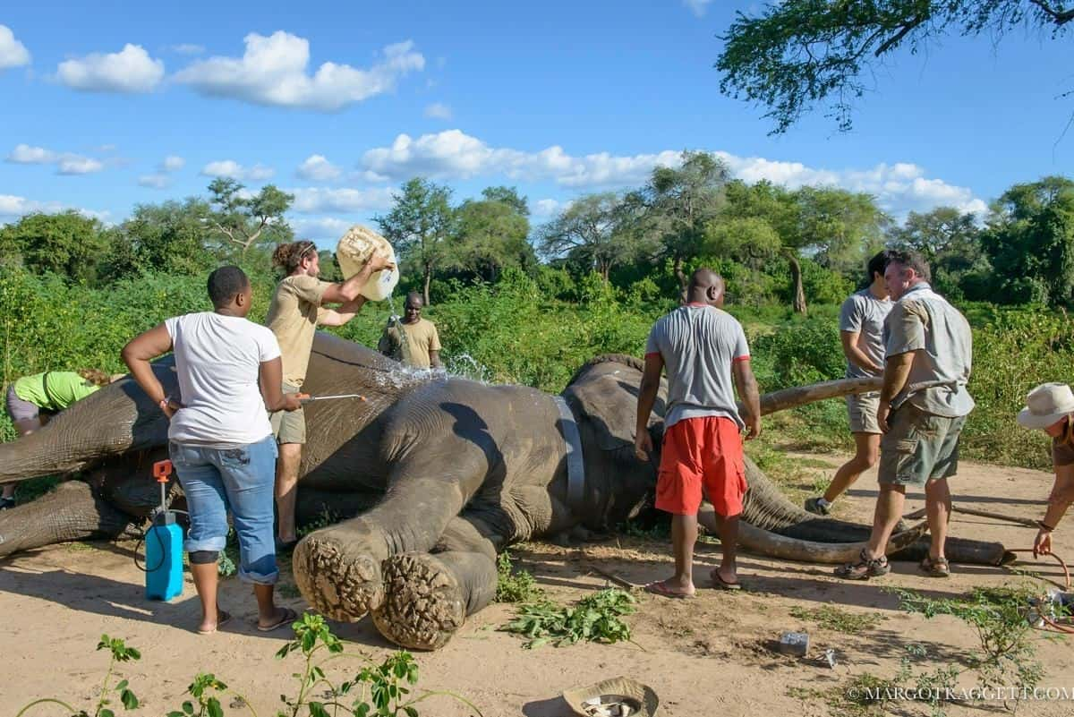bushlife elephant treatment