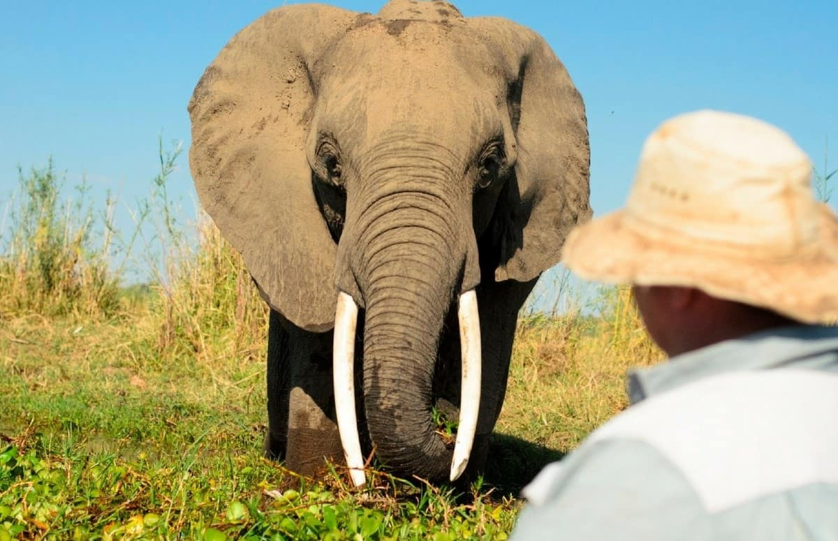 Bushlife Safaris Elephant Encounter