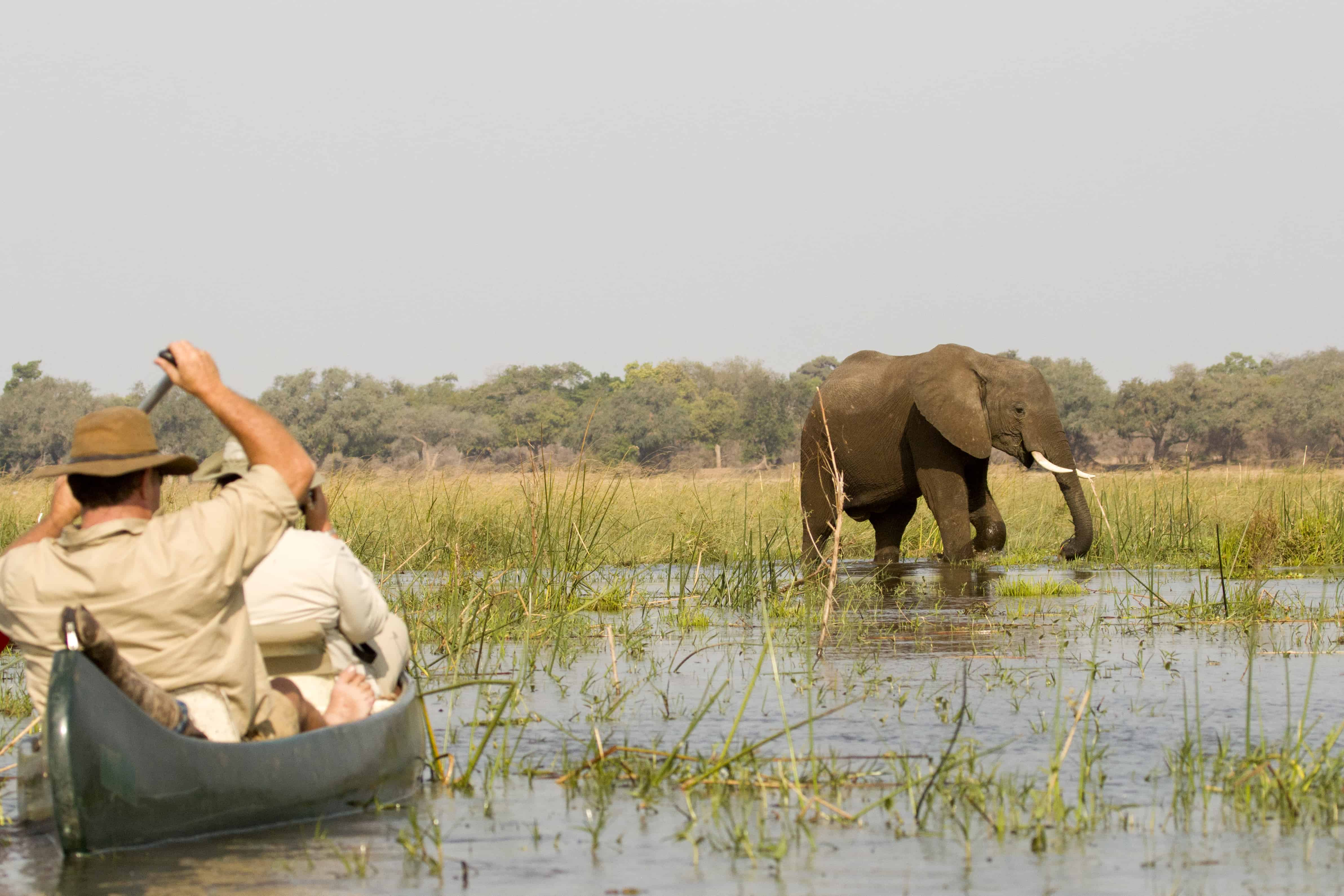 Ruwesi Canoe Trails Mana Pools