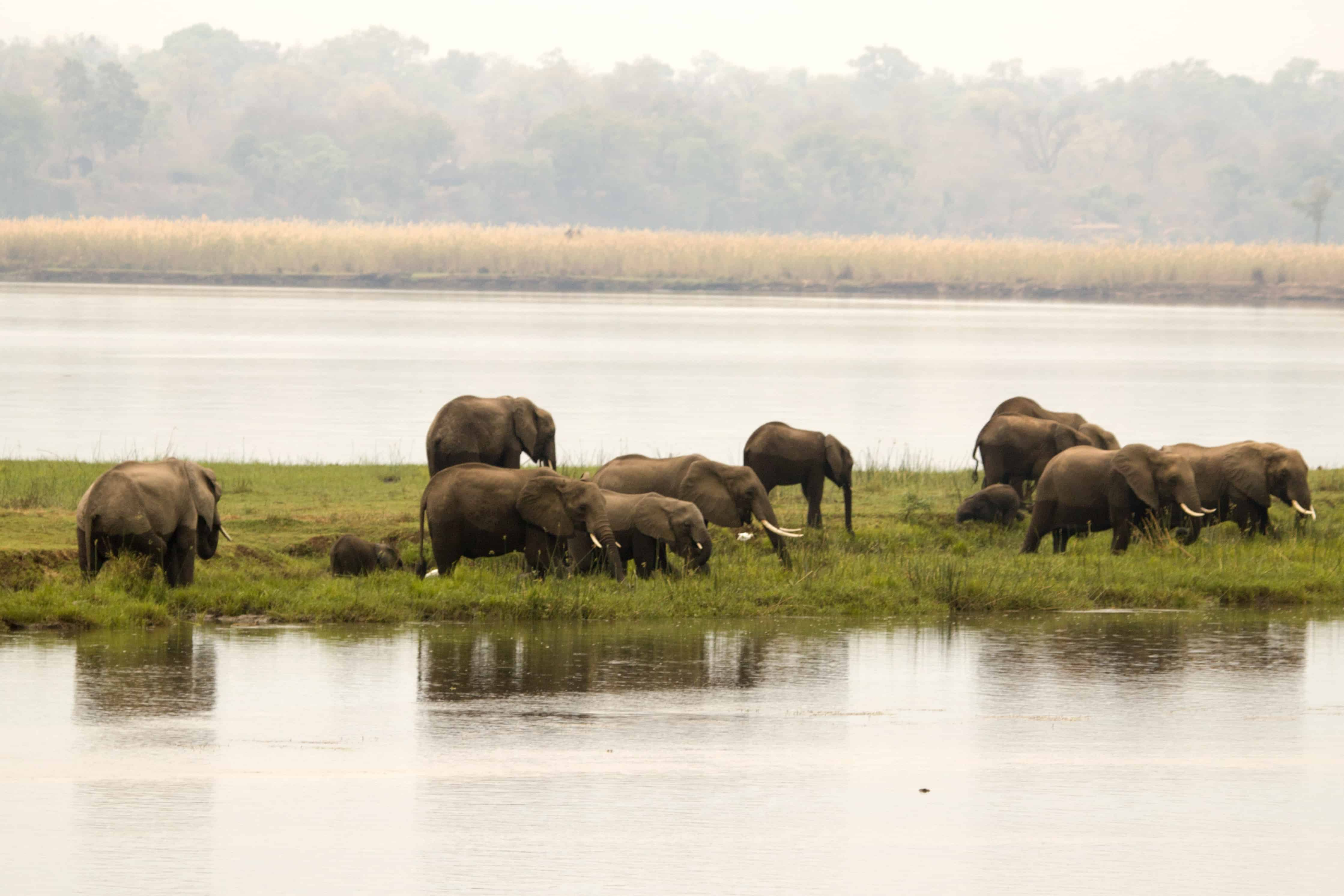 Elephants Bushlife Safaris Mana Pools