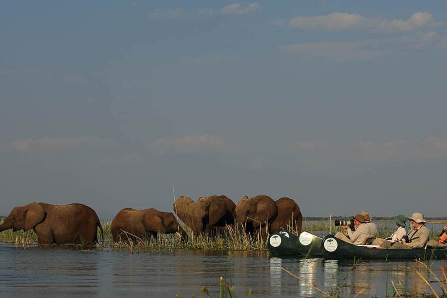 Bushlife Safaris Zimbabwe Safari - Feel