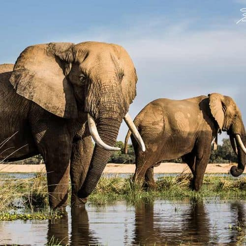Annamaria Gremmo - Elephants Bushlife Safaris
