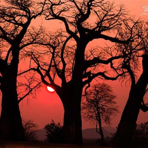 Annamaria Gremmo - Peach Sunset Bushlife Safaris