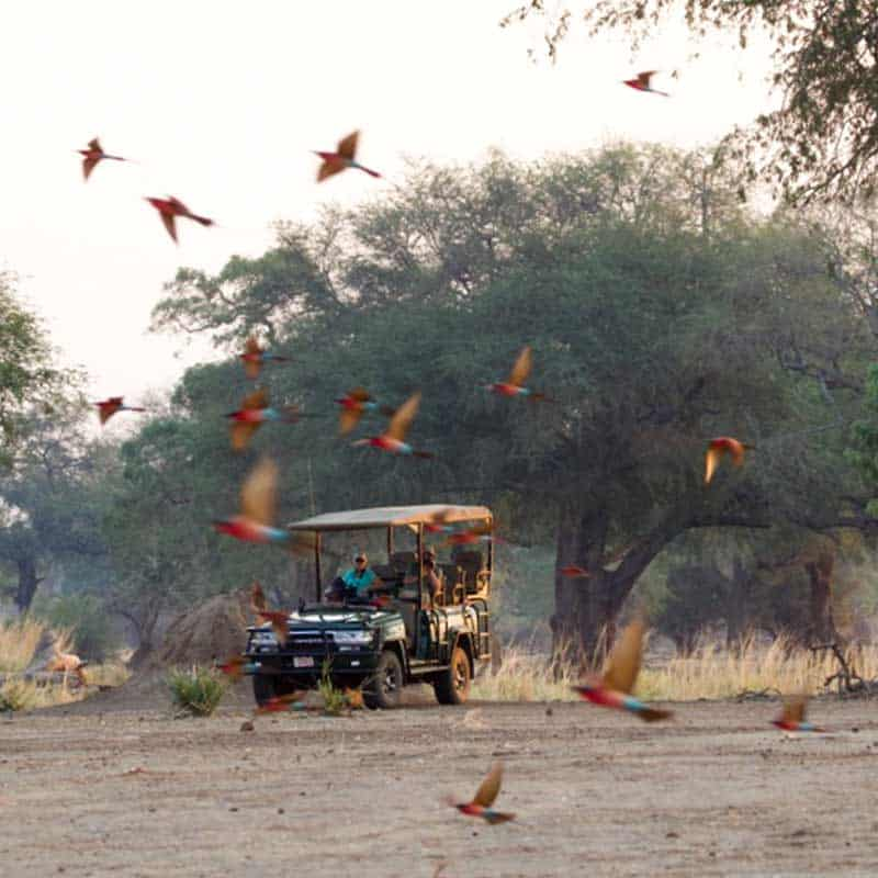 Little Vundu Camp Bushlife Safaris Birdlife