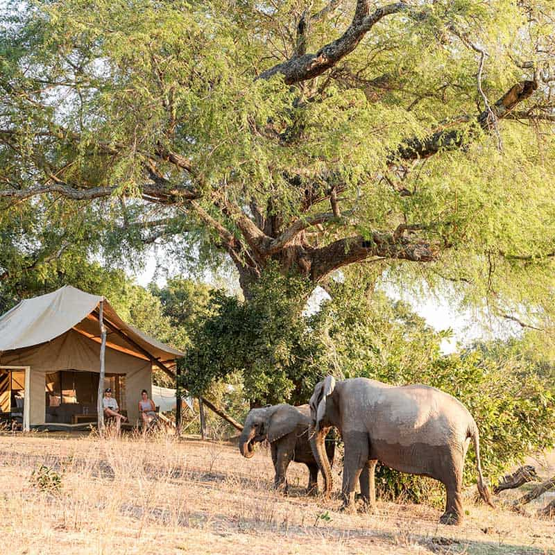 Little Vundu Camp Bushlife Safaris Elephants Bedroom