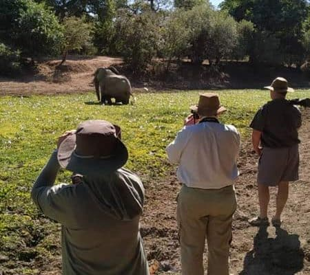 Bushlife Safaris Game Viewing