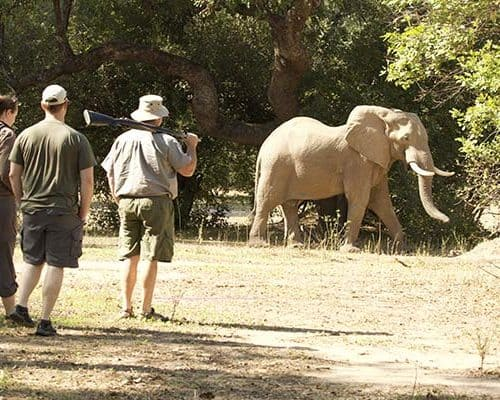Game Viewing- Bushlife Safaris