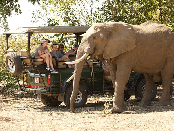 Game Drive Bushlife Safaris