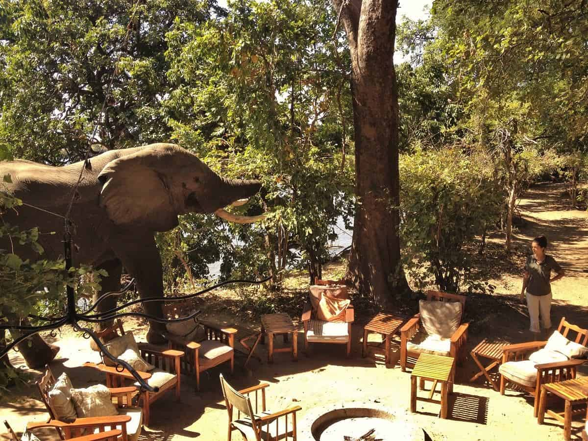 Vundu Camp Elephant Saying Hi