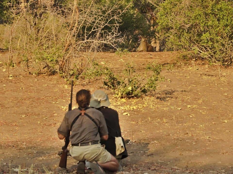 vundu-camp-lion-yawning