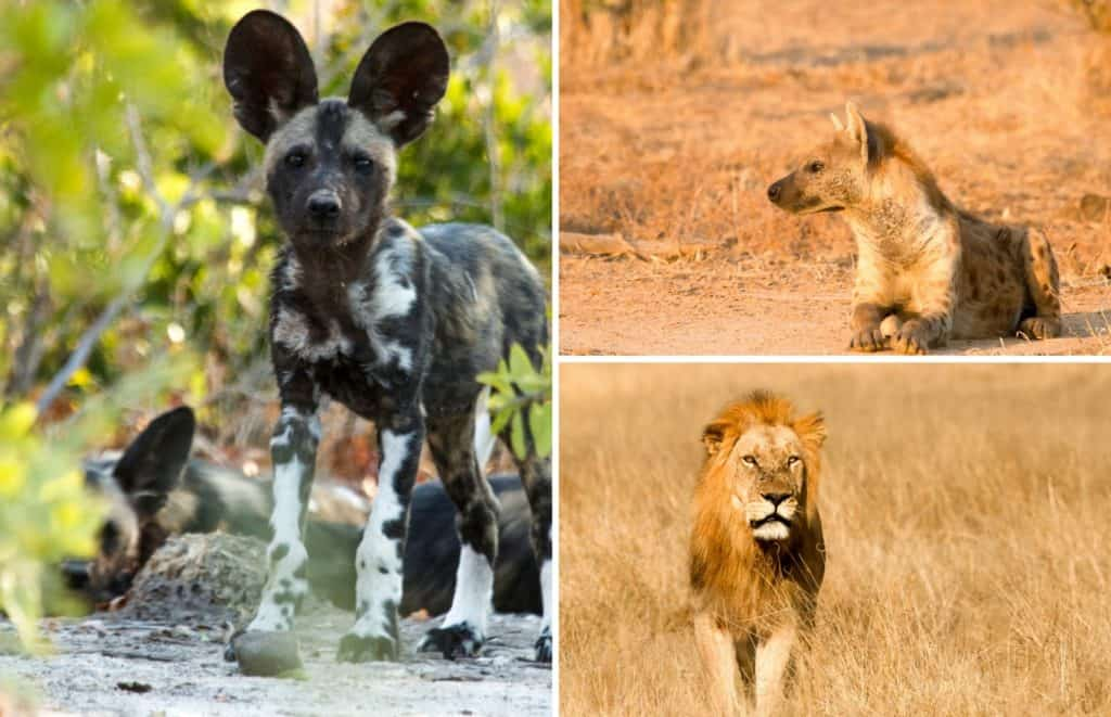 Bushlife Safaris Wildlife Sightings