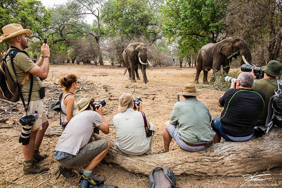 Bushlife Safaris Photographic Safari - Sight2