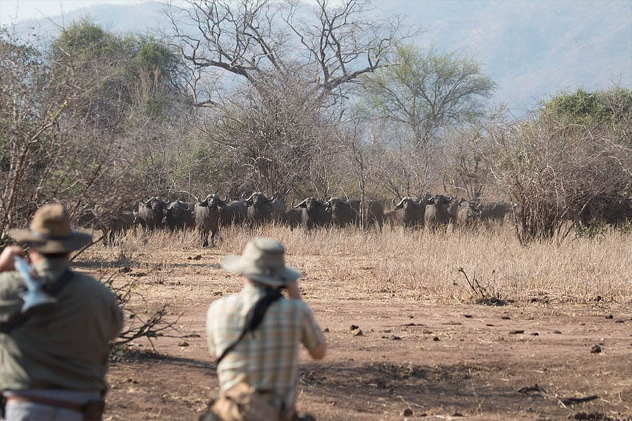 Bushlife Safaris Sensesational Safari - Smell2