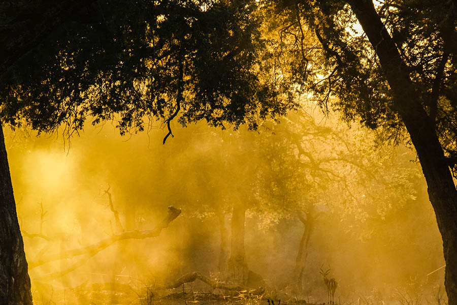 Bushlife Safaris Zimbabwe Safari - Feel2