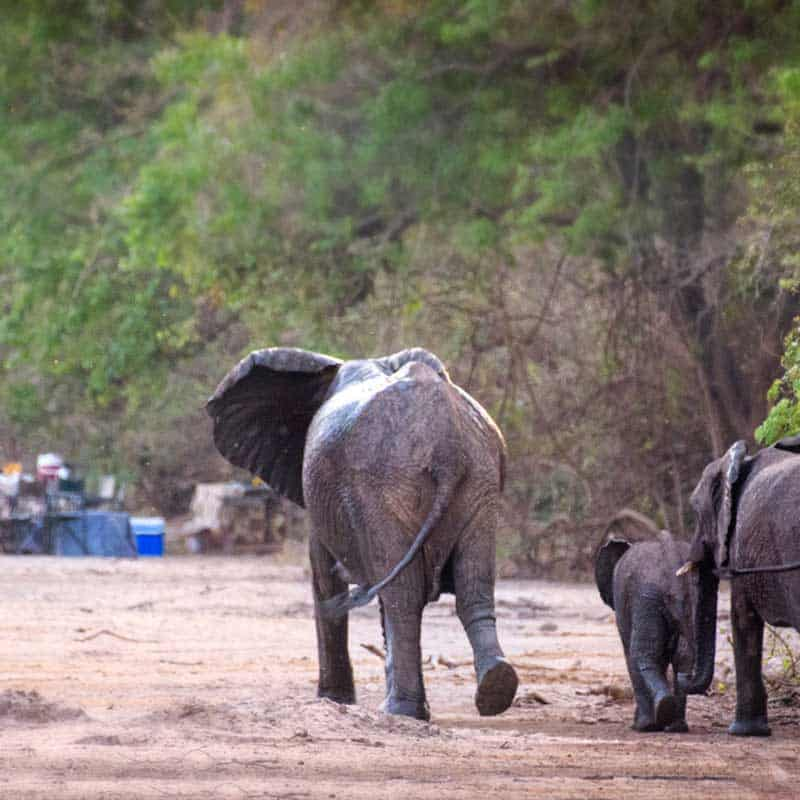 Chitake Springs Bushlife Safaris elephants visit