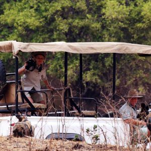 Little Vundu Camp Bushlife Safaris Wild Dog