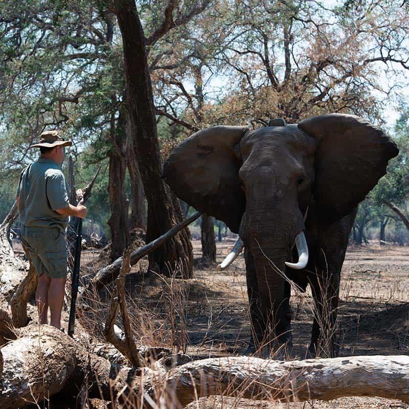 Vundu Camp Bushlife Safaris Tusker