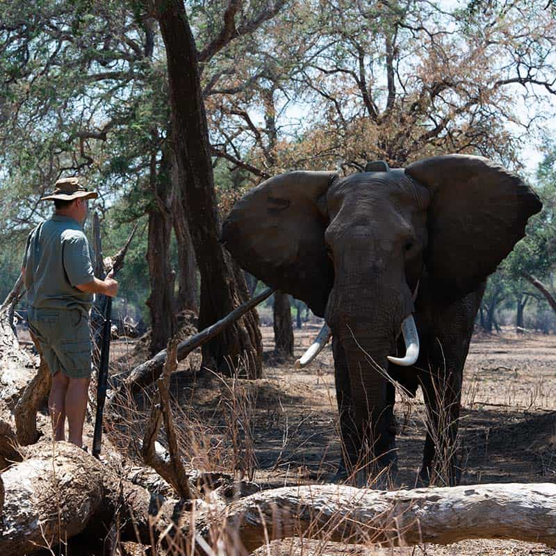 Vundu Camp Bushlife Safaris Tusker