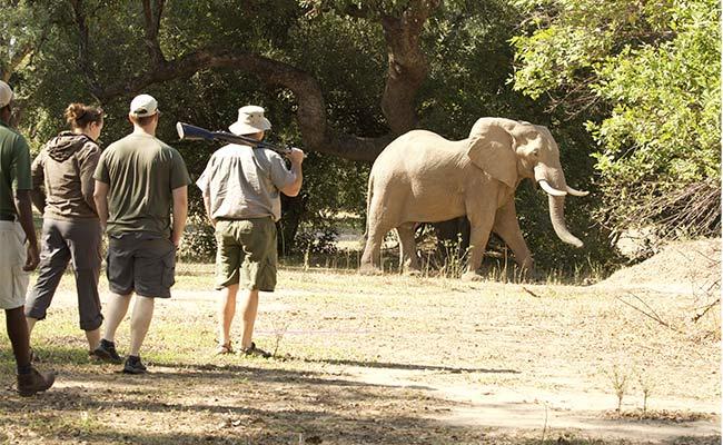 Game Viewing- Bushlife Safaris