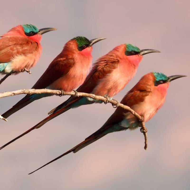 Birds vundu