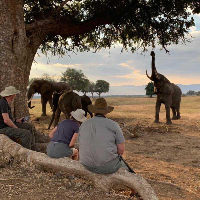 Elephants gallery