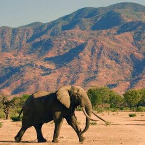 Zambezi Adventure